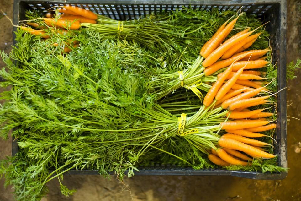Farm Fresh - Fresh ... a wonderful change of pace!