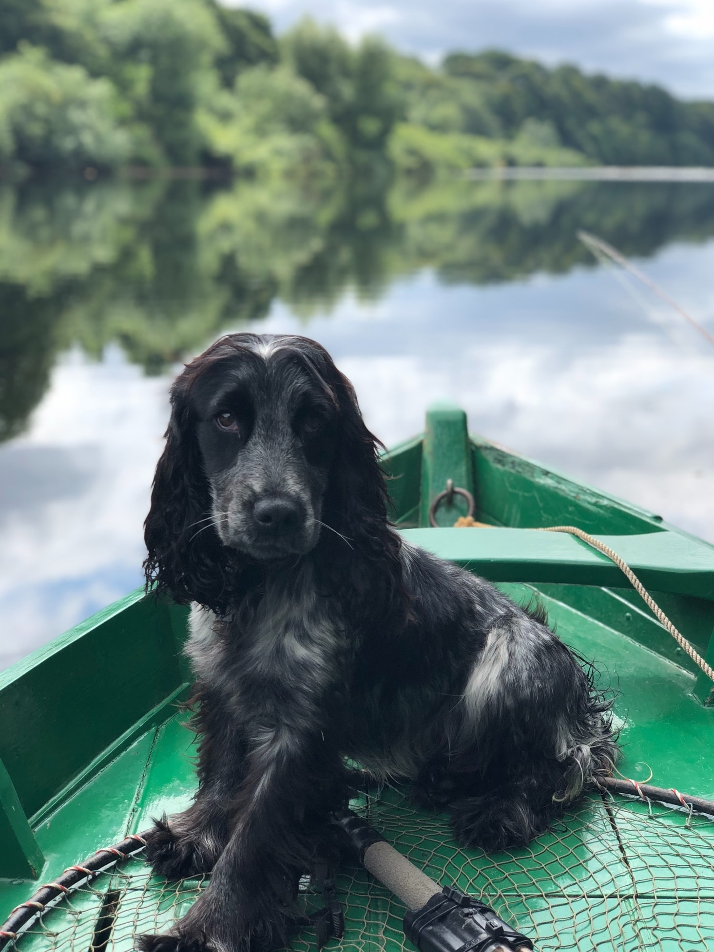 Take your pup along on a fishing trip in the Catskills.