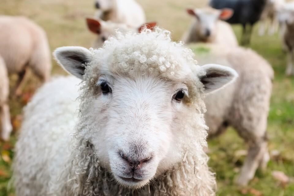 Best Farm Stays Near NYC | Visit the Catskills