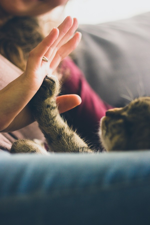 cat giving high-five to owner