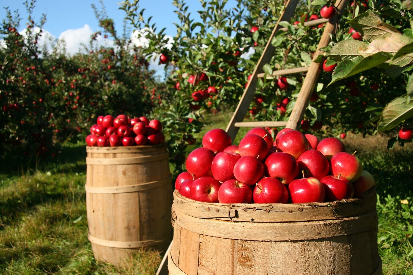 pick your own farm in the Catskills